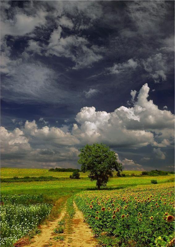 佛经中让人心静的14句话,句句智慧,唯有心静,才能生出智慧
