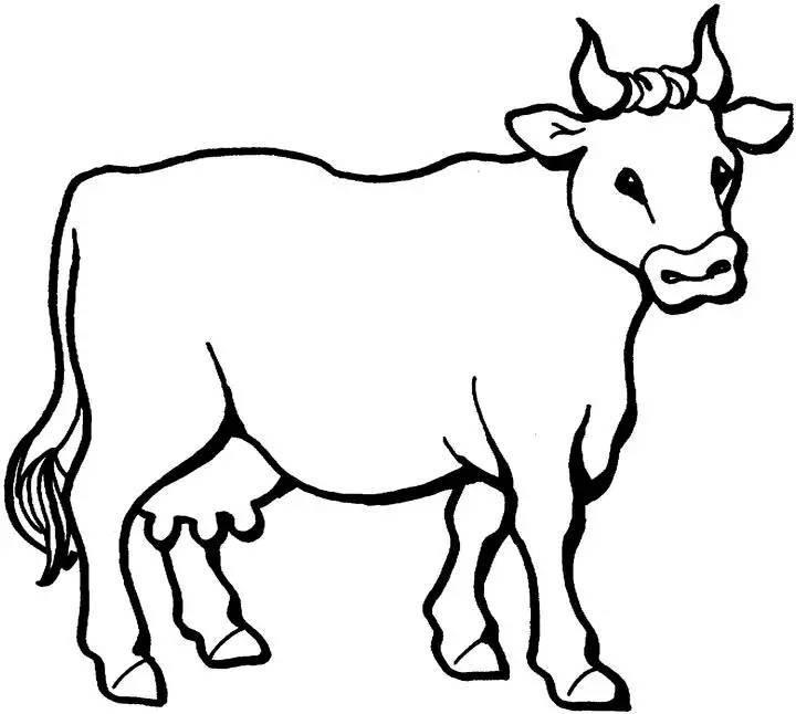 牛是怎么死的?(看懂了思想至少成熟30年)