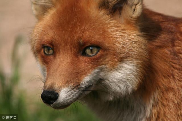 狼之道,狐之智,鹰之谋!大智慧!(深度好文)