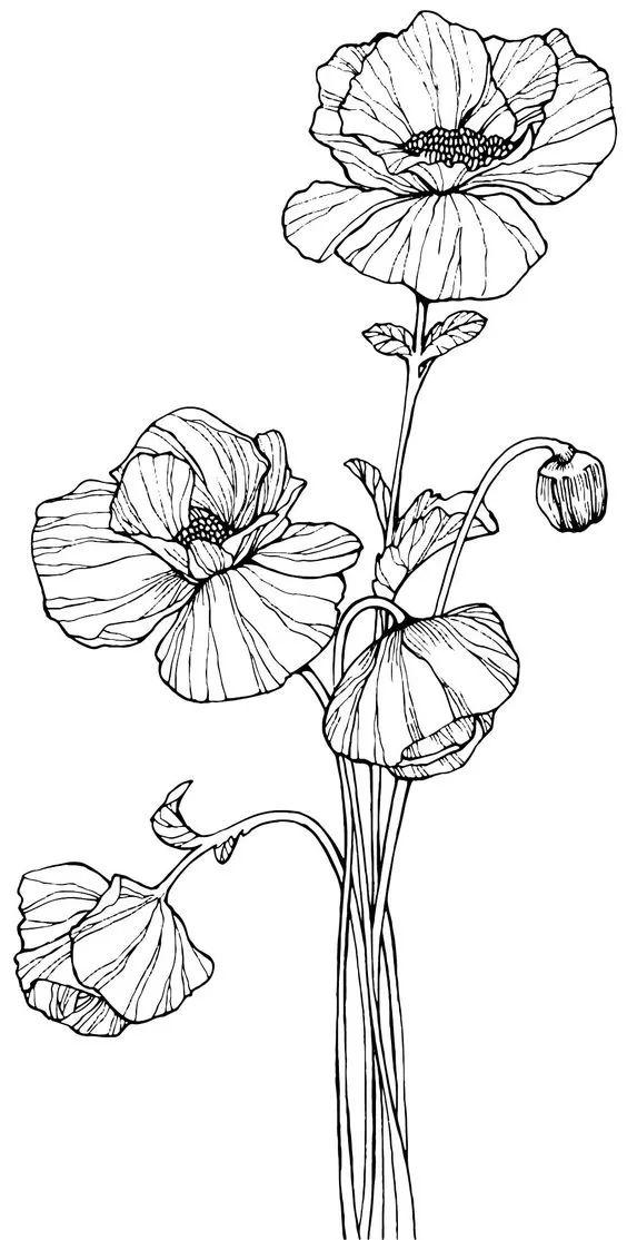 50张花卉线稿,拿去画吧!